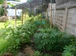 nossa horta bonita